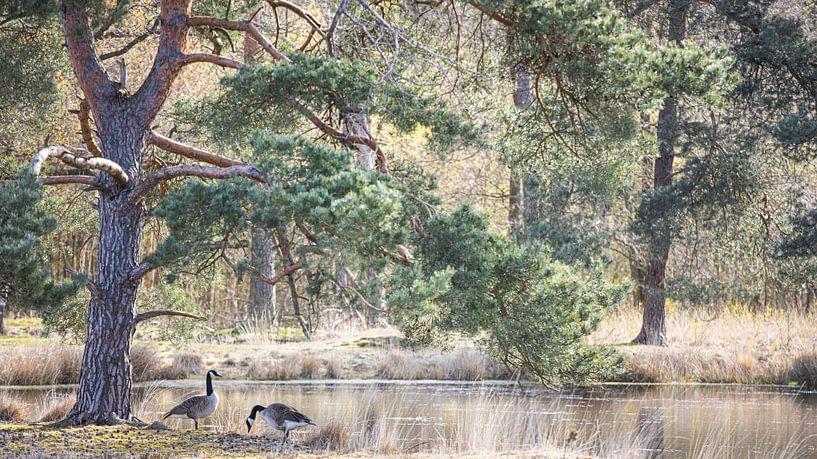 Naturschutzgebiet Kortenhoeff von Teuni's Dreams of Reality