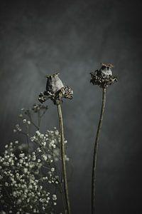 Droogbloemen van Melanie Schat