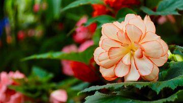 De Botanische Tuinen van Christchurch - Nieuw Zeeland van Maurits Simons
