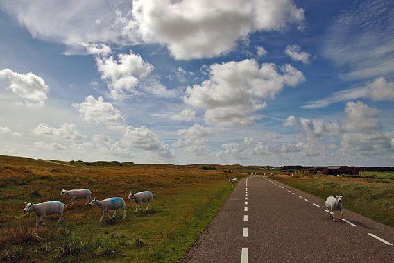 schapen op texel van Dirk van Egmond