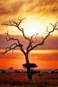 After the rain, Kruger Park South Africa