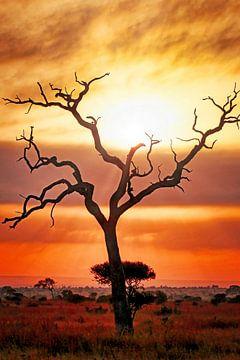Nach dem Regen, Kruger NP Südafrika sur W. Woyke