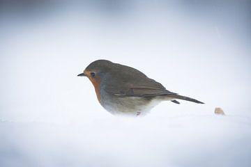 Robin bird in the snow van Mark Zanderink
