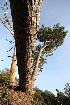 Gevallen boom van Orhan Sahin
