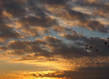 Vogels in de gouden avond van Simone Gouman