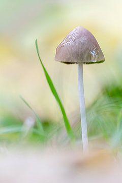Pilz im Regen von Christa Thieme-Krus