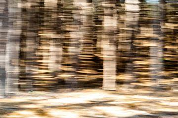 Bewegung entlang der Bäume von Mandy Metz