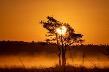 kalmthoutse heide, zonsopgang van Lisa Dumon