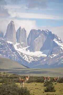 Uitzicht op Torres del Paine met guanaco's op de voorgrond