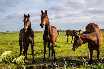 Paarden in de Wei 5 van Brian Morgan
