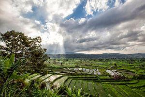 Groene cascade rijst veld plantage terras. Bali, Indonesië