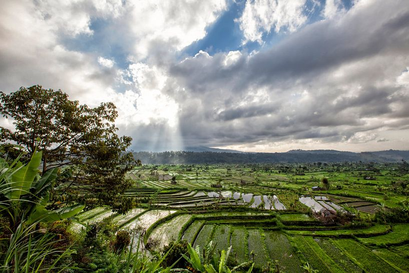 Groene cascade rijst veld plantage terras. Bali, Indonesië van Tjeerd Kruse