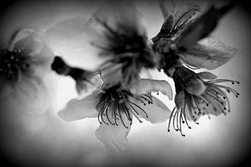 Lumières florales sur Martine Affre Eisenlohr