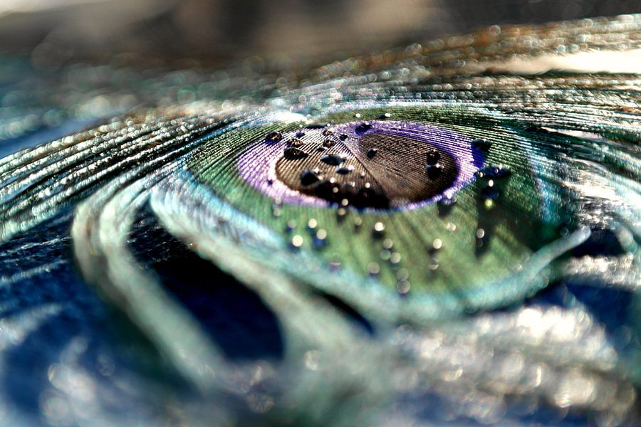 Pauwenoog - A peacock's eye van Amanda van den Berg / FotoGaaf