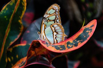 Vlindertuin Orchideeënhoeve von Mignon Goossens