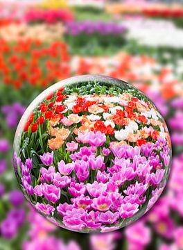 Glazen bol met verschillende tulpen in bloemenveld. van Ben Schonewille