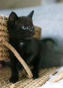 Zwarte kitten bij rieten mand van