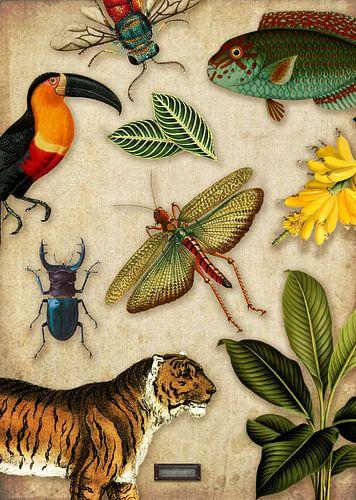 Tropische schoolplaat met vogels, vissen en jungle dieren.