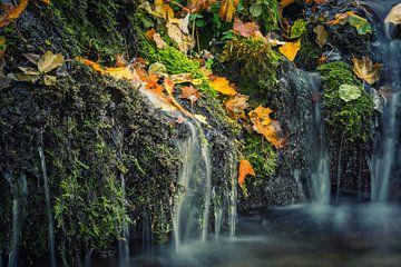 Water met herfstbladeren van Tobias Luxberg