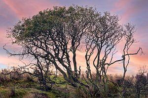 Een duistere boom in een kleurrijke natuurlijke omgeving