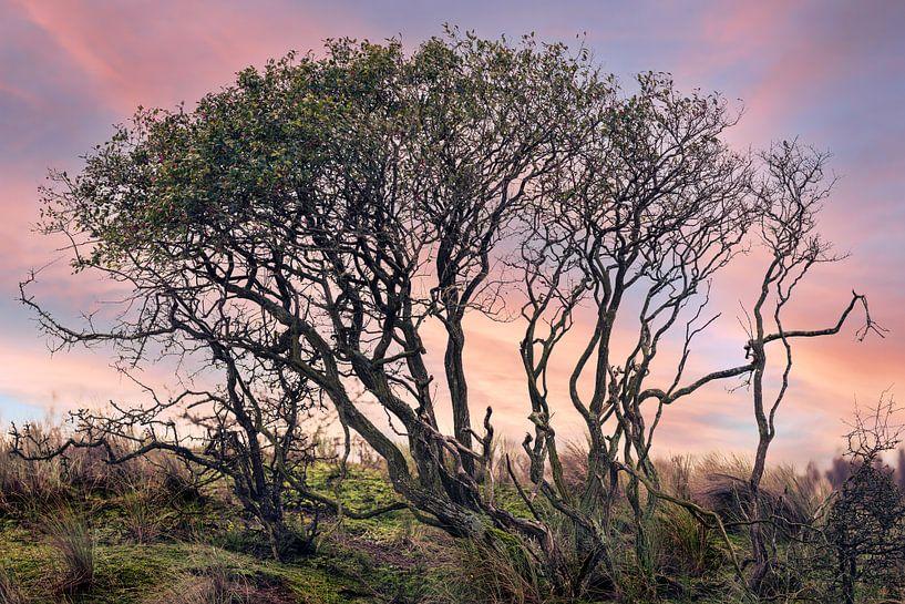 Een duistere boom in een kleurrijke natuurlijke omgeving van Steven Dijkshoorn
