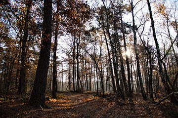 Hoge Bomen in de Zon (Herfst) von DoDiLa Foto's