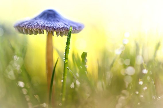 Magic Mushroom... van Bob Daalder