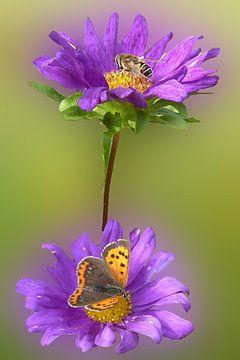 Paarse bloem von Gonnie van Hove