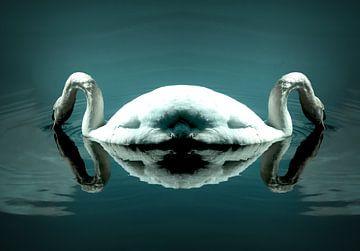 zwaan van Marieke Bakker