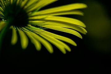 Abstrakte, grafische Darstellung der gelben Blume von Caroline van der Vecht