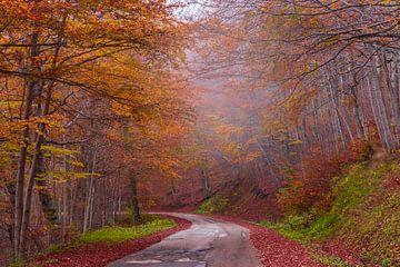 Herbstlicher Gebirgsweg mit Rot- und Orangenblättern und -nebel von Gea Gaetani d'Aragona