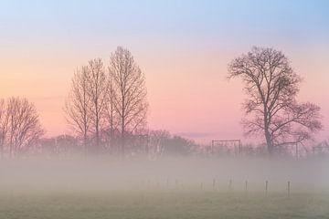 in der Morgendämmerung Nebel über der Wiese