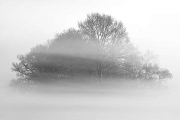 Mistig bos van Jan Dolfing