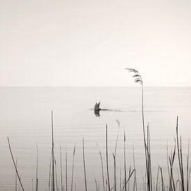 Diving Swan von Lena Weisbek