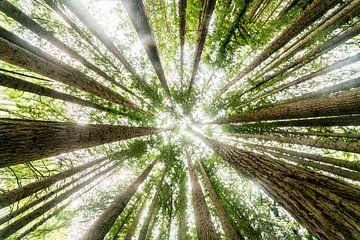 Bäume aus einer anderen Perspektive. von Niels Rurenga