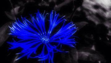 Blauer Traum von Jenny Heß
