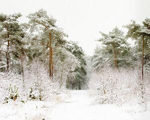 De weg door de winter
