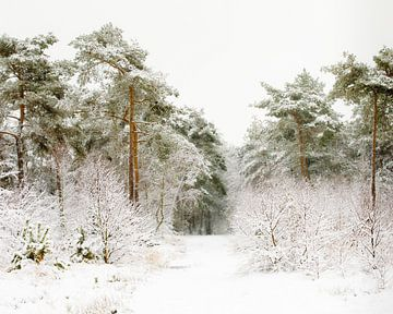 De weg door de winter van