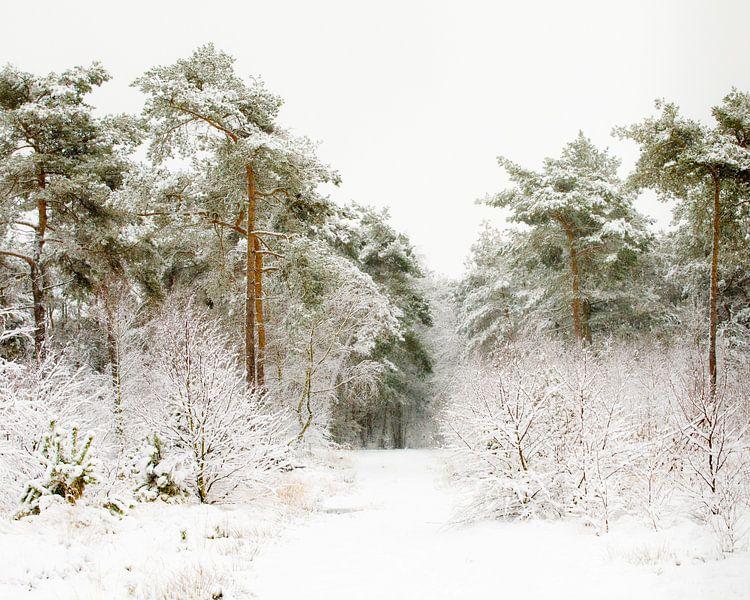 De weg door de winter van Nando Harmsen