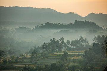 Foggy rice fields in Sideman on Bali in Indonesia sur Michiel Ton