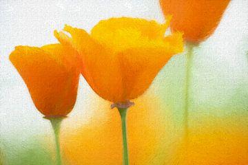 Schijnpapaver (oranje) van Francis Dost