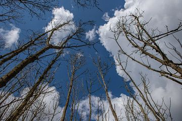 Hoge bomen van Marcel van Berkel