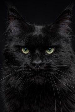 Close-up kop van een zwarte Maine Coon kat Black panther van Nikki IJsendoorn
