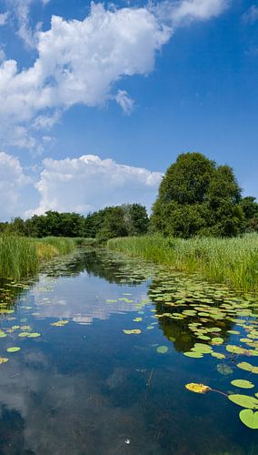 Staand panorama van het Naardermeer van Natuurmonumenten, Nederland