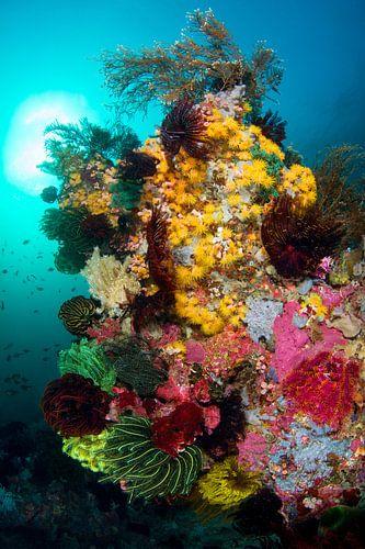 Kleurenexplosie op het rif