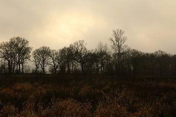 Landschap met vreemd licht