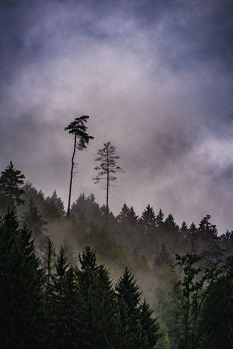 Bosrijke berg in de regen van