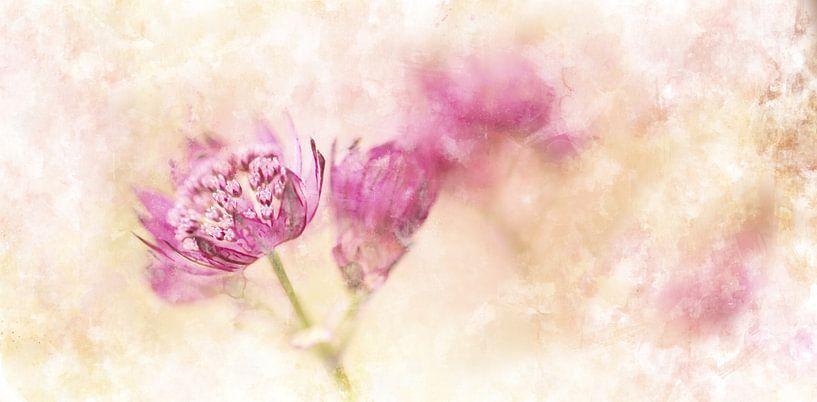 Bloemen 1 van Silvia Creemers