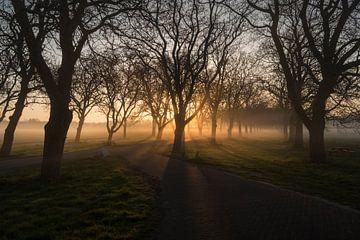 Magische zonnestralen tussen walnotenbomen Notenlaan Mariënwaerdt van Moetwil en van Dijk - Fotografie