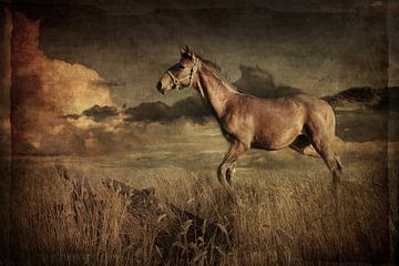 Pferd 1 von Heike Hultsch